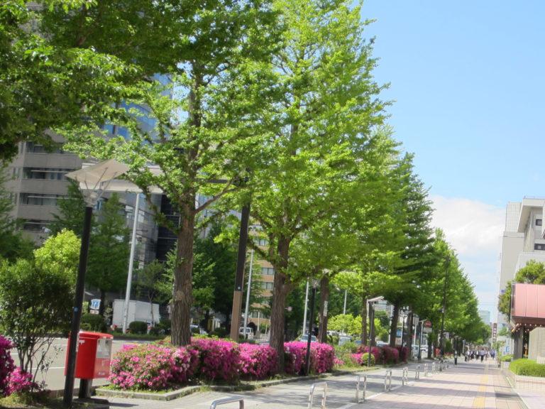 建物前の街路樹